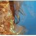 Костюм Золотой Рыбки